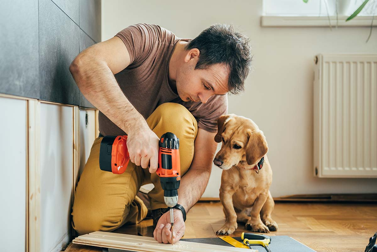 Home Improvement with dog